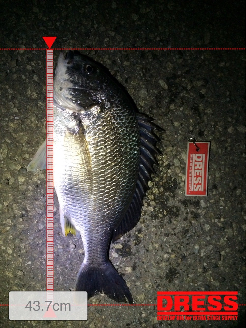 ナオキさんの投稿画像,写っている魚はキチヌ