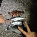 りゅうさんの東京都御蔵島村での釣果写真