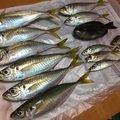 gagamaruさんの岡山県新見市での釣果写真