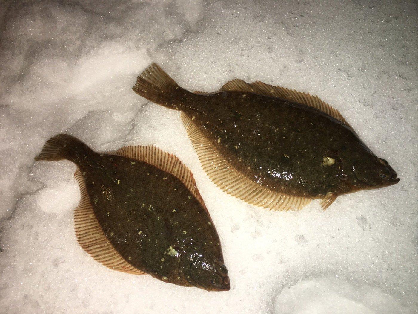 nakadenさんの投稿画像,写っている魚はマガレイ