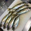 ふみやさんの兵庫県高砂市でのアジの釣果写真