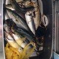 ペペロンチーノさんの千葉県千葉市でのブリの釣果写真