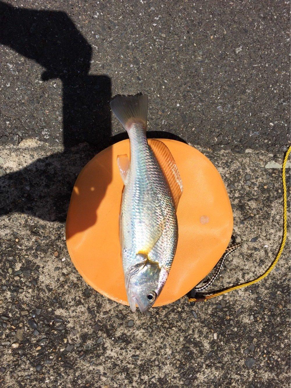 tetsuさんの投稿画像,写っている魚はイシモチ