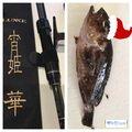 NANKOREさんの静岡県掛川市での釣果写真