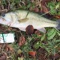 きのまーさんの茨城県つくば市での釣果写真