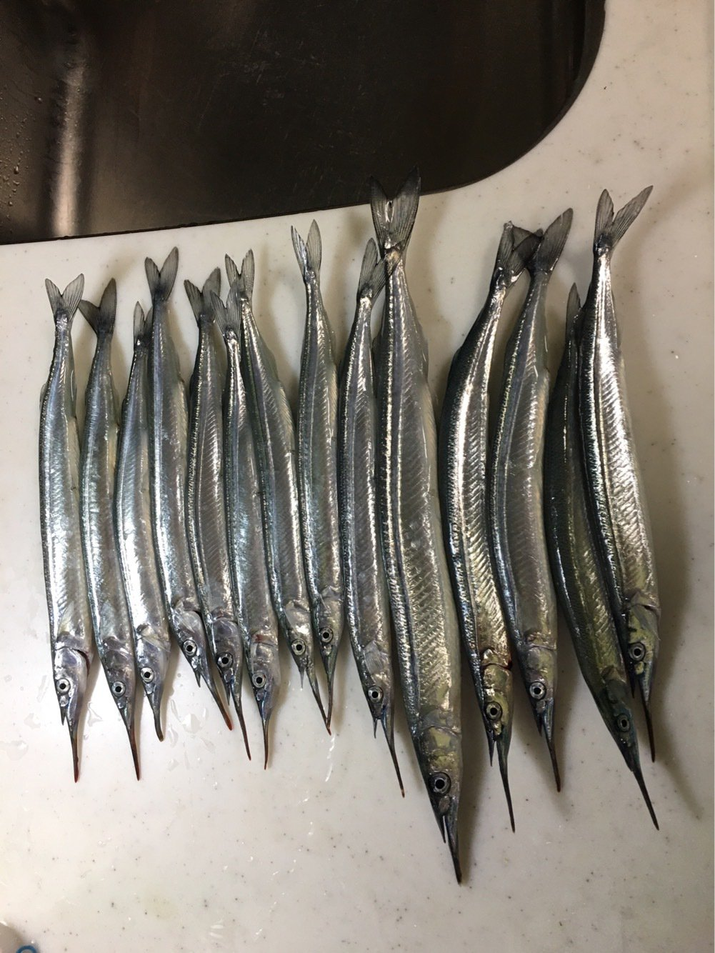 ハムタローさんの投稿画像,写っている魚はサヨリ