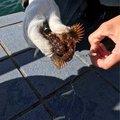 booさんの兵庫県南あわじ市でのカサゴの釣果写真