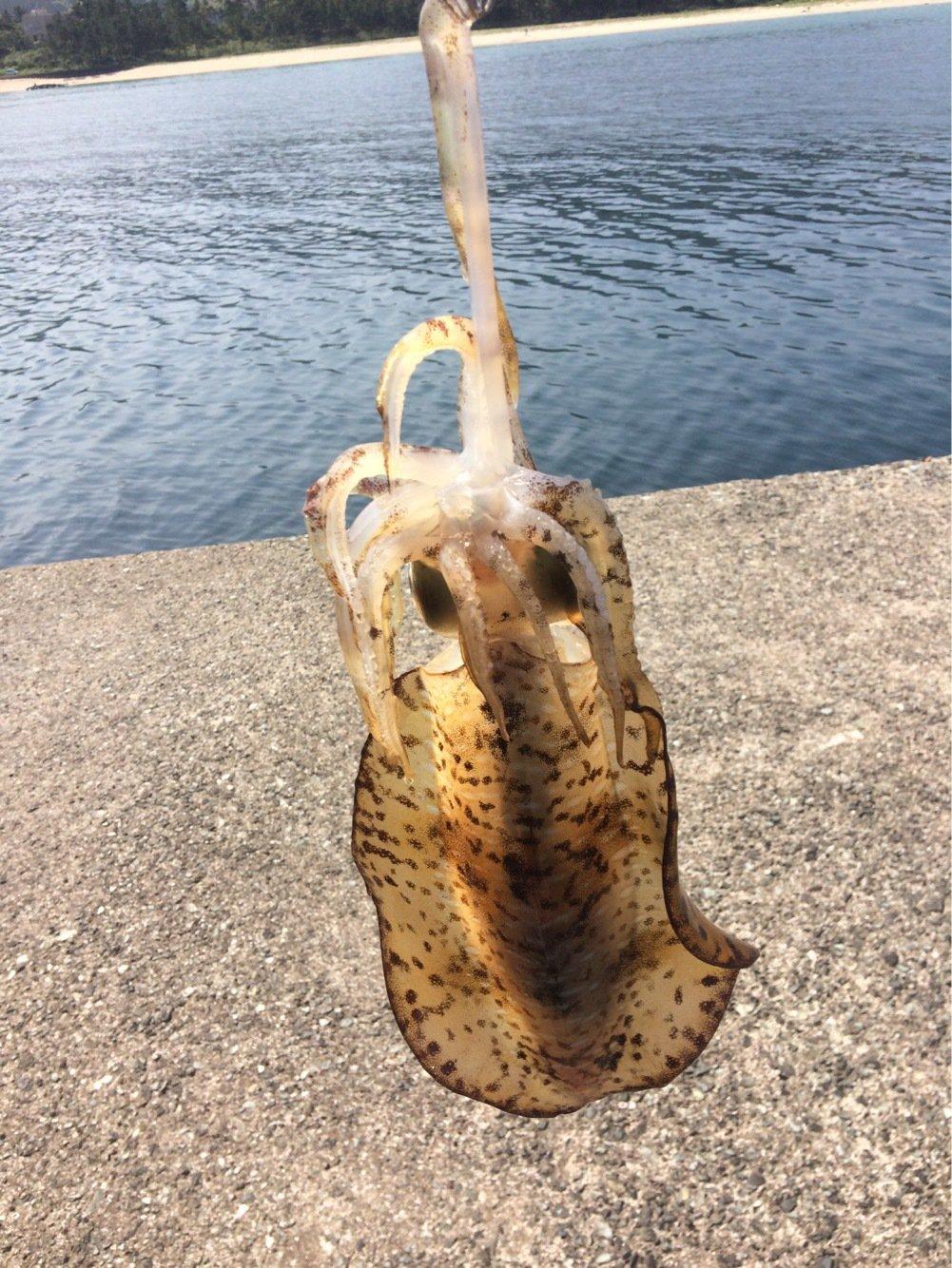 RHWさんの投稿画像,写っている魚はアオリイカ