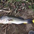 ぐんぐんぐるとさんの茨城県稲敷市での釣果写真