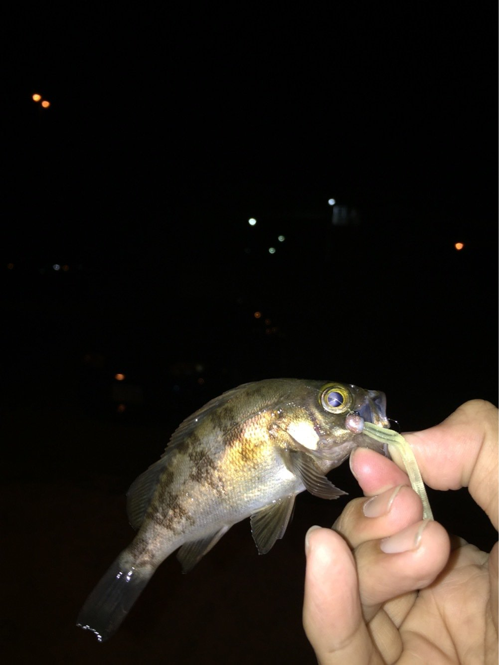 MSKさんの投稿画像,写っている魚は