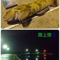 Tomo_Pandaさんの宮城県名取市でのアイナメの釣果写真