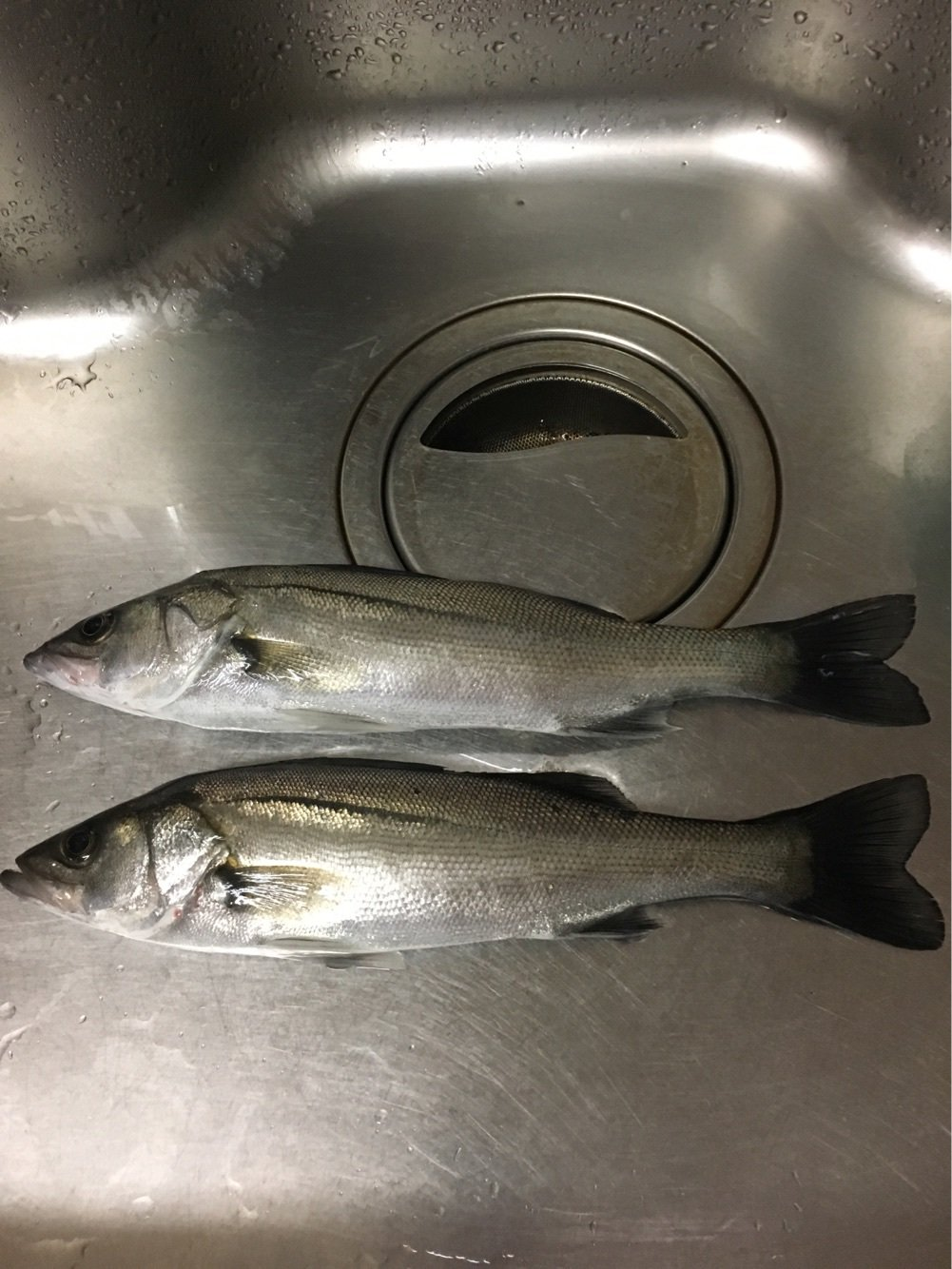 まさぴさんの投稿画像,写っている魚はスズキ