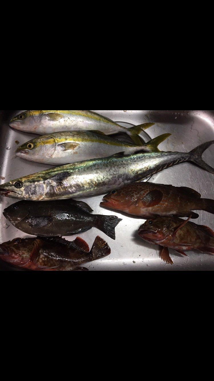 ひろさんの投稿画像,写っている魚はブリ,サワラ,キジハタ,カサゴ,メジナ