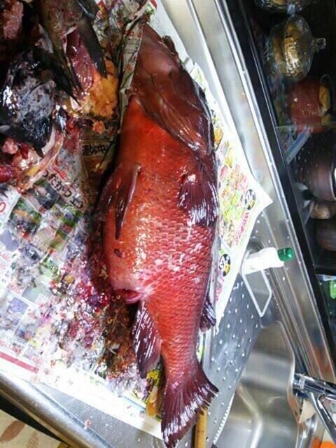 磯太郎さんの投稿画像,写っている魚はコブダイ