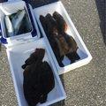 しょーいちさんの千葉県いすみ市でのヒラメの釣果写真