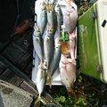 松田哲郎さんの静岡県榛原郡での釣果写真