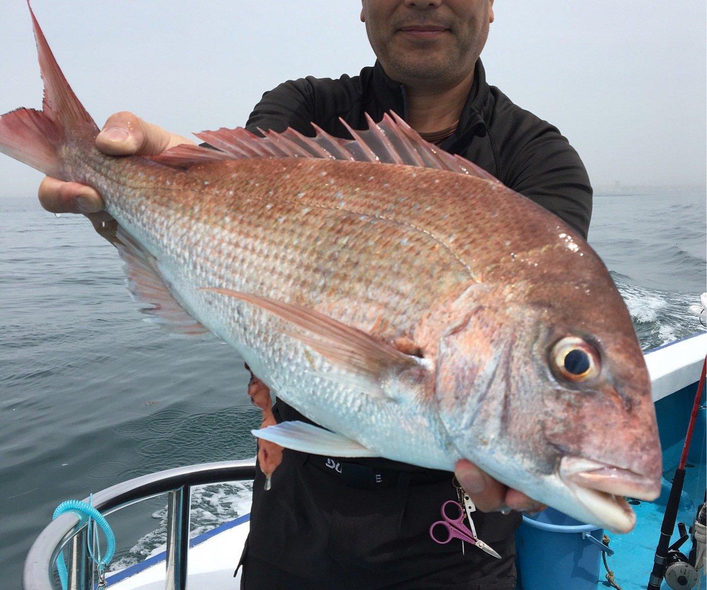 michiさんの投稿画像,写っている魚はマダイ