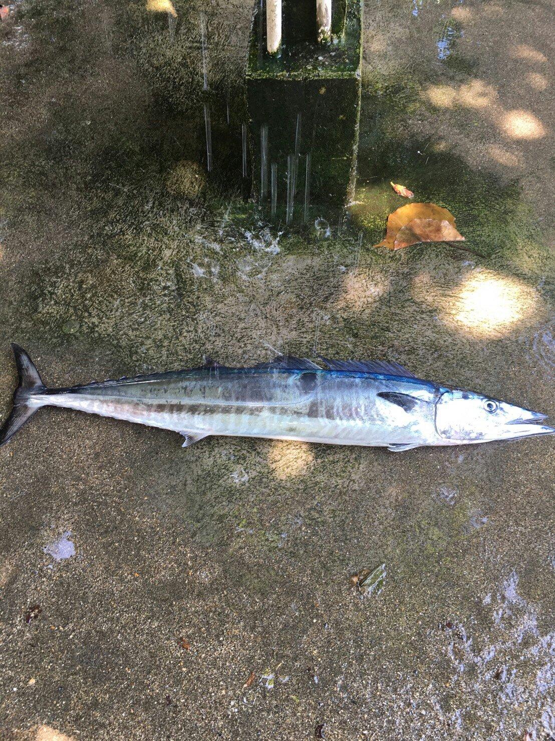 たんこぶさんの投稿画像,写っている魚は