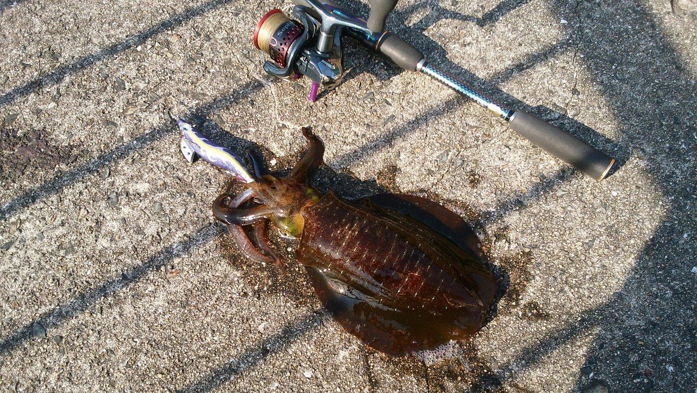 佃ジョニィさんの投稿画像,写っている魚はアオリイカ