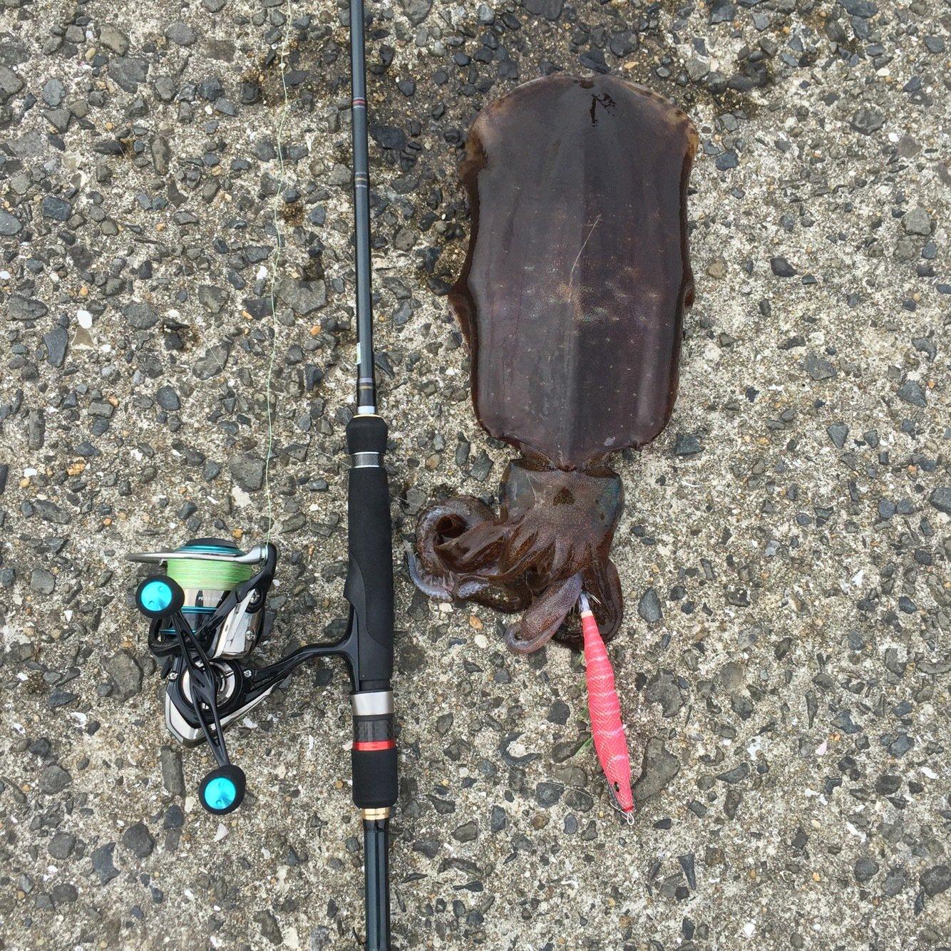 チャンヒカ@餌木團さんの投稿画像,写っている魚はアオリイカ