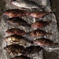 わっきーさんの熊本県上天草市でのスズキの釣果写真