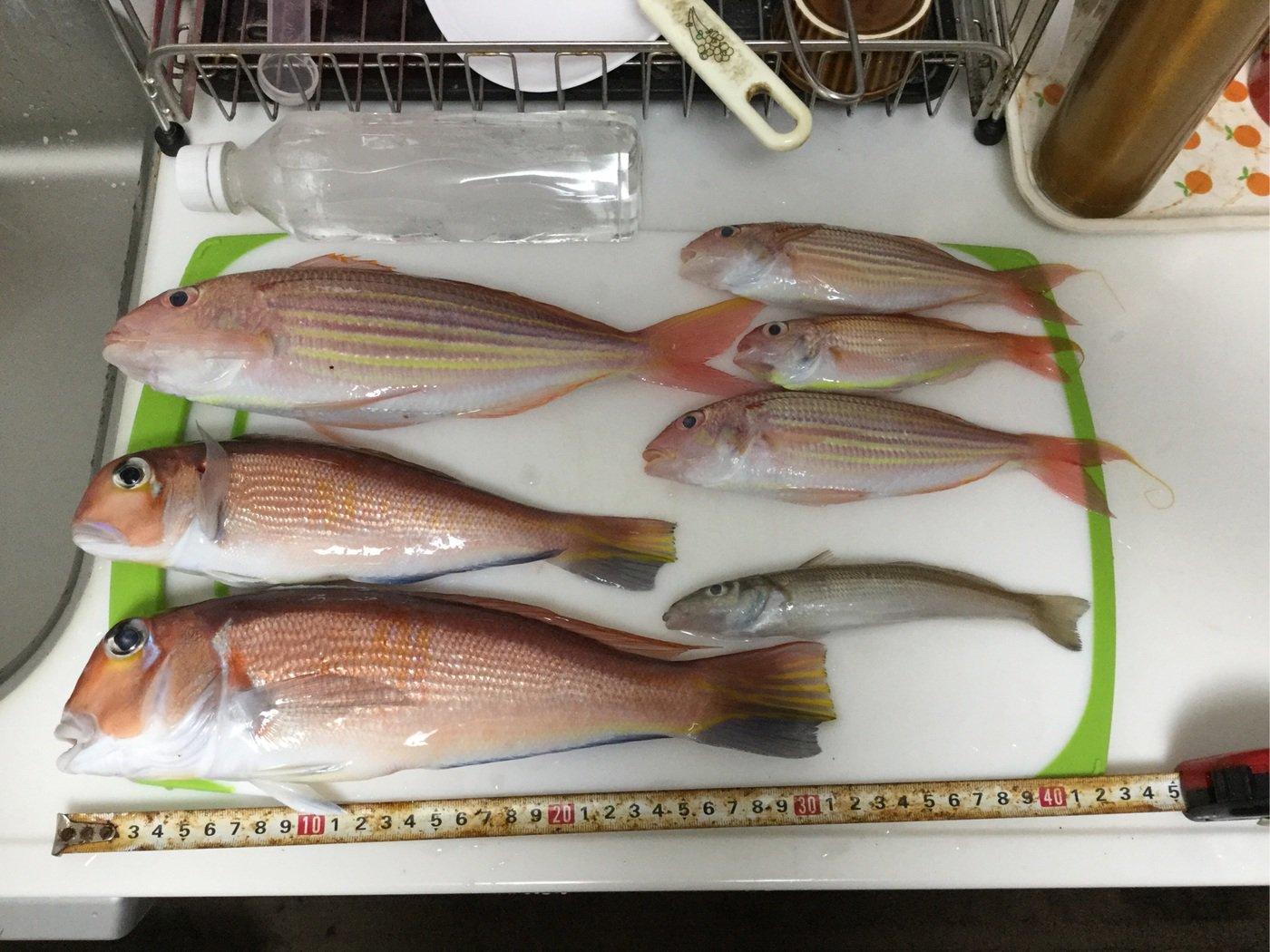 タクヤさんの投稿画像,写っている魚はアマダイ,イトヨリダイ,シロギス