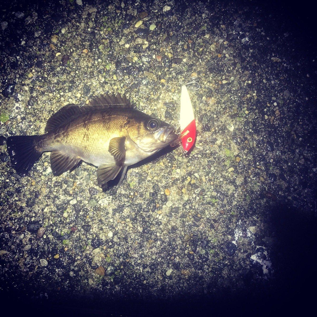 タンクトッパーさんの投稿画像,写っている魚は