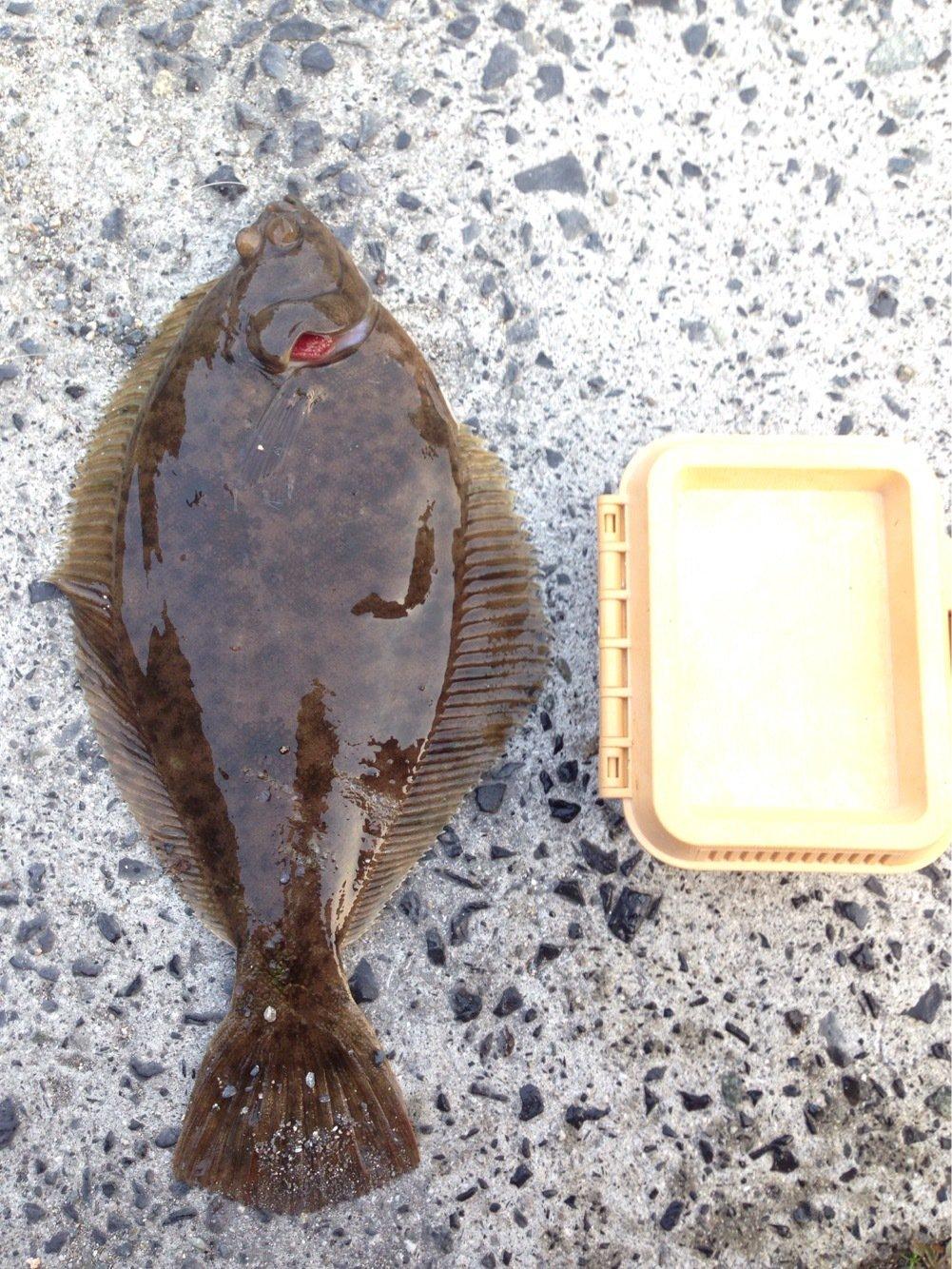 ふみやさんの投稿画像,写っている魚はカレイ