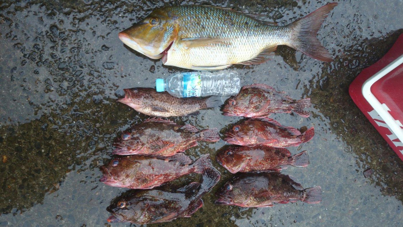 はったーさんの投稿画像,写っている魚はフエフキダイ