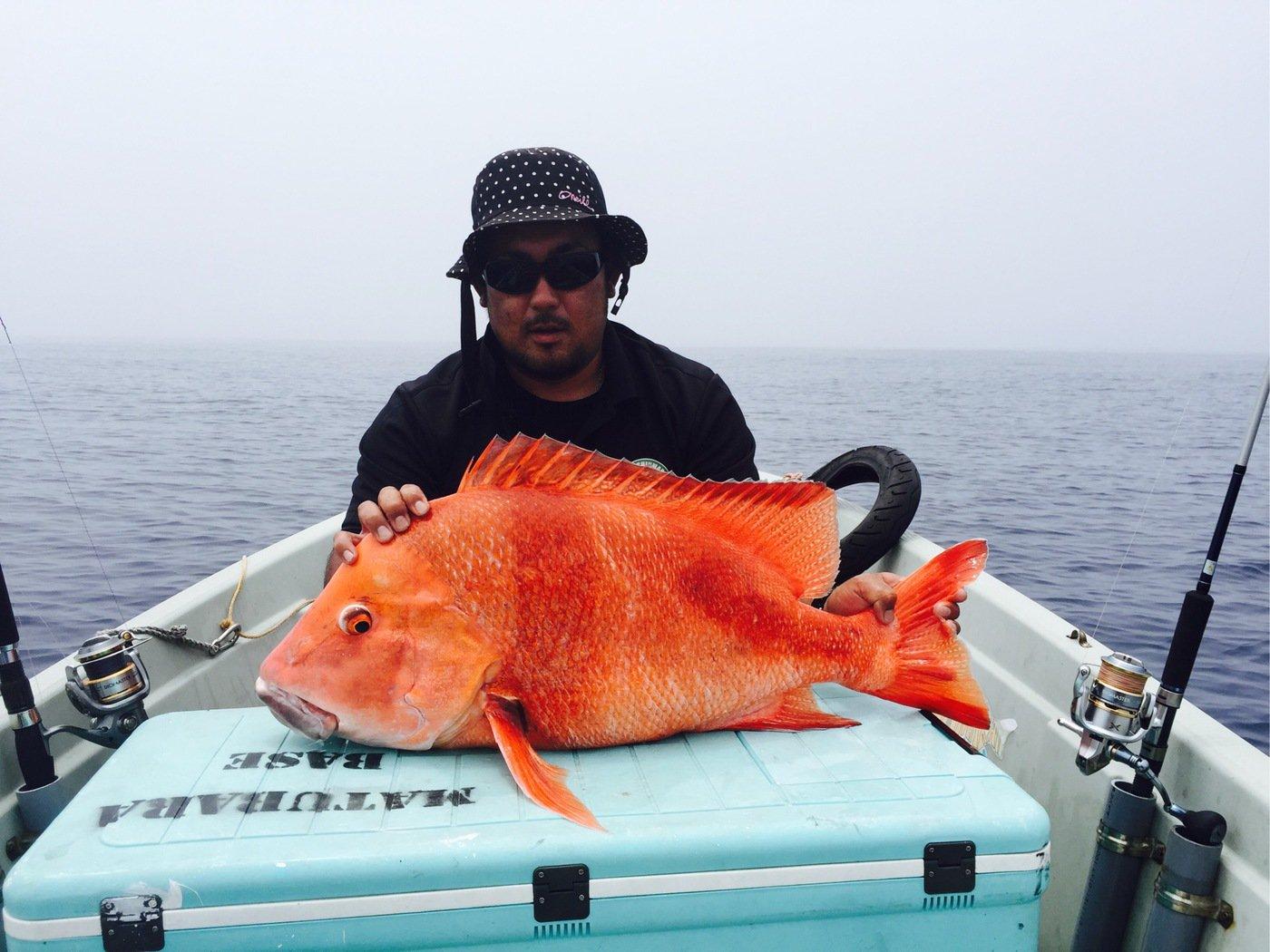 しんまらいさんの投稿画像,写っている魚はセンネンダイ