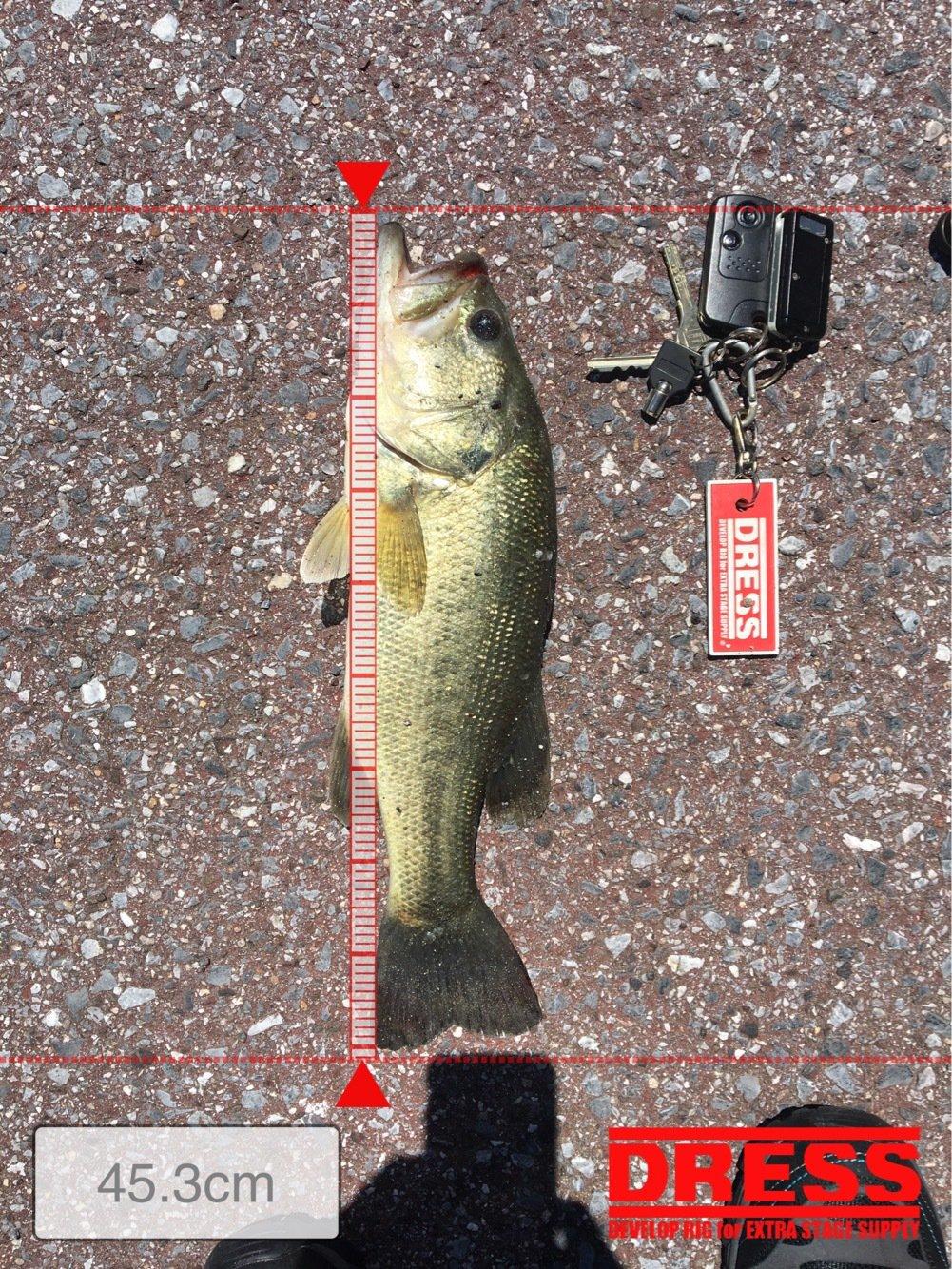 haru5427さんの投稿画像,写っている魚はブラックバス