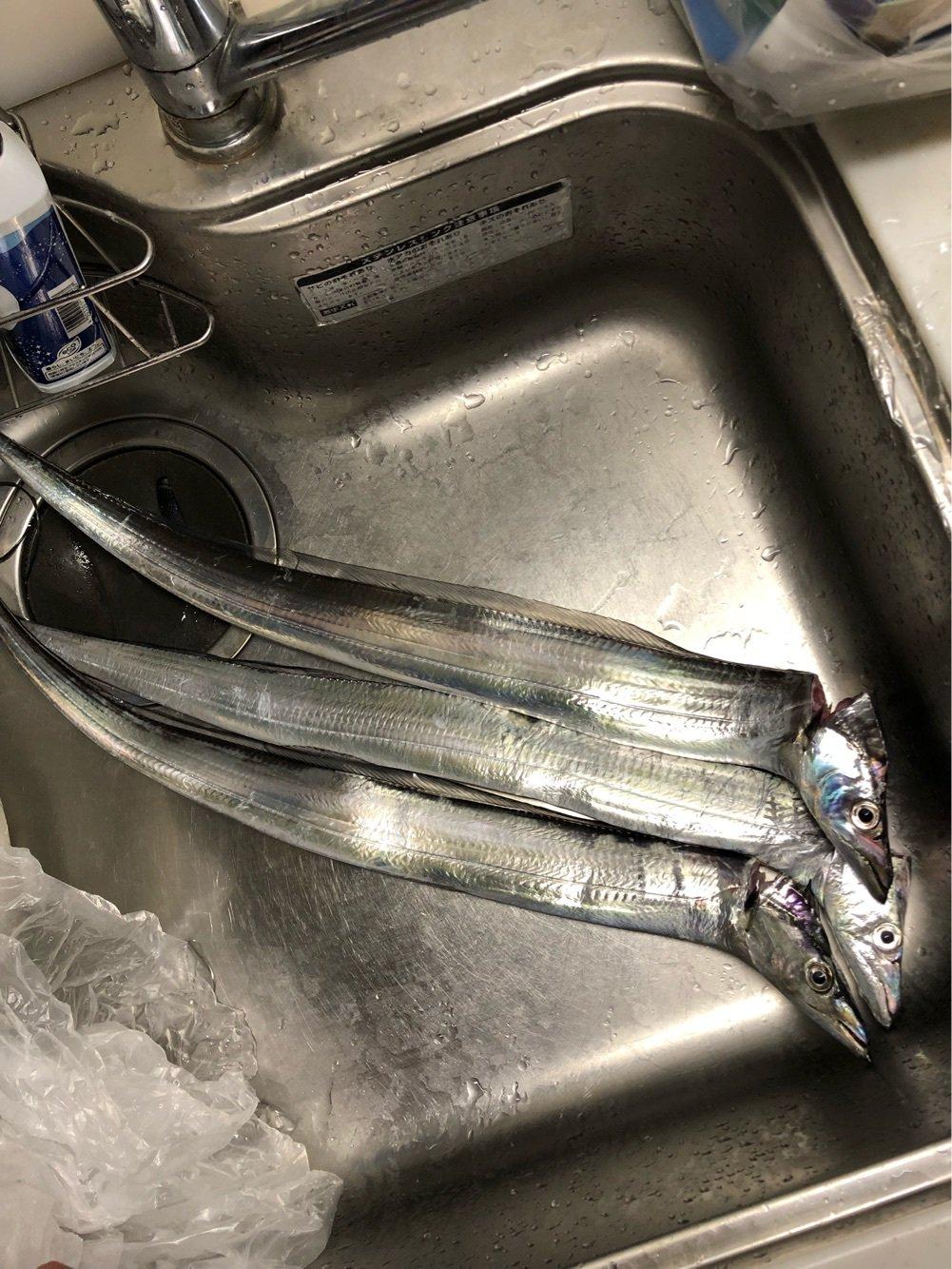 しんちゃんさんの投稿画像,写っている魚はタチウオ
