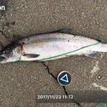 TxxTさんの北海道北見市での釣果写真