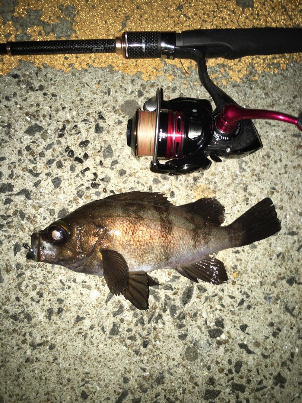 ゲンゴロウ(Team邪道)さんの投稿画像,写っている魚はメバル
