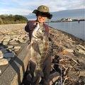 kjさんの千葉県浦安市でのクロダイの釣果写真