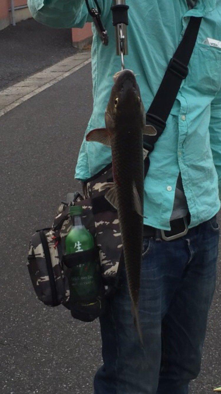 マサさんの投稿画像,写っている魚はニゴイ