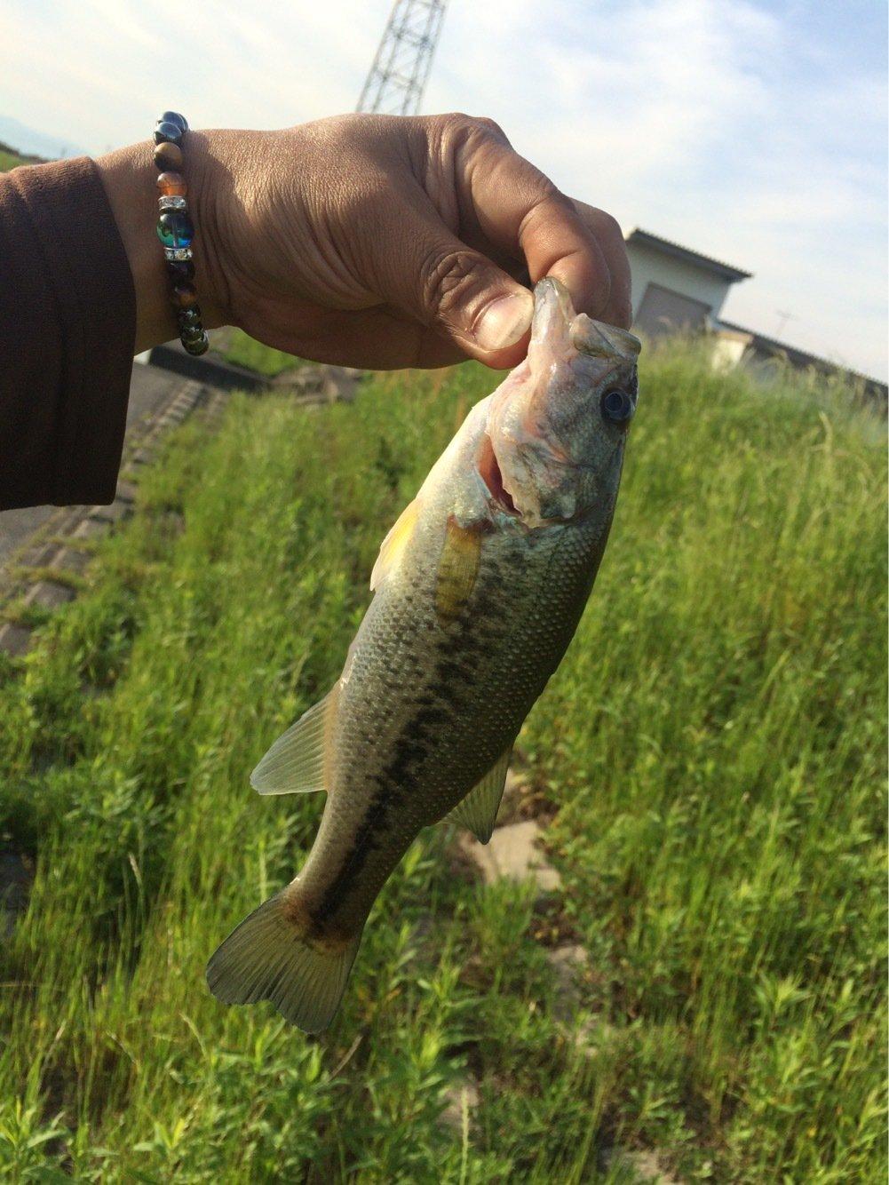 啓介さんの投稿画像,写っている魚はブラックバス