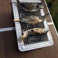 かなみさんの長野県上田市での釣果写真