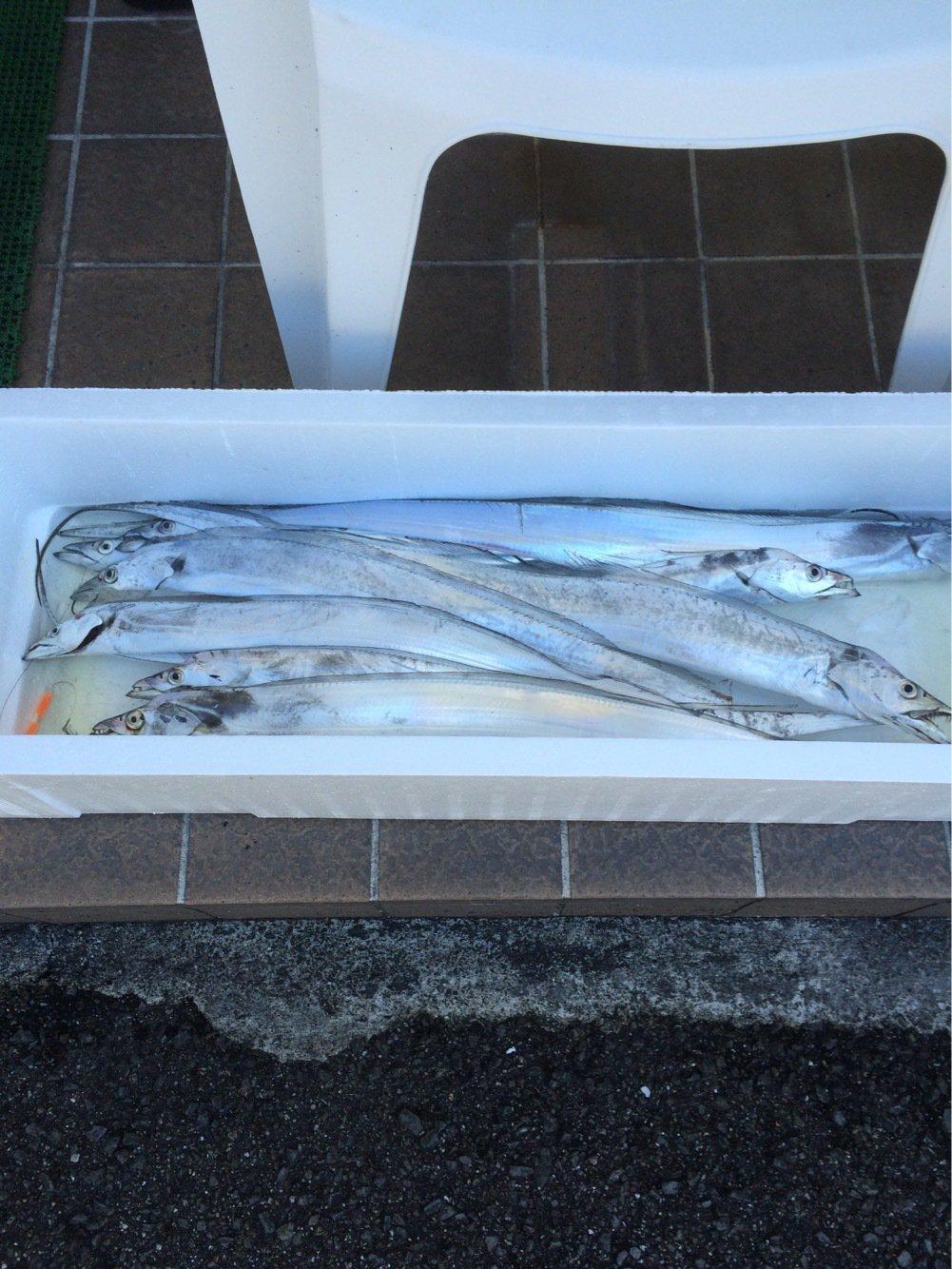 のぶさんの投稿画像,写っている魚はタチウオ