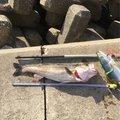 マサ1173さんの千葉県東金市での釣果写真