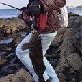 ヨッシーさんの岩手県九戸郡での釣果写真