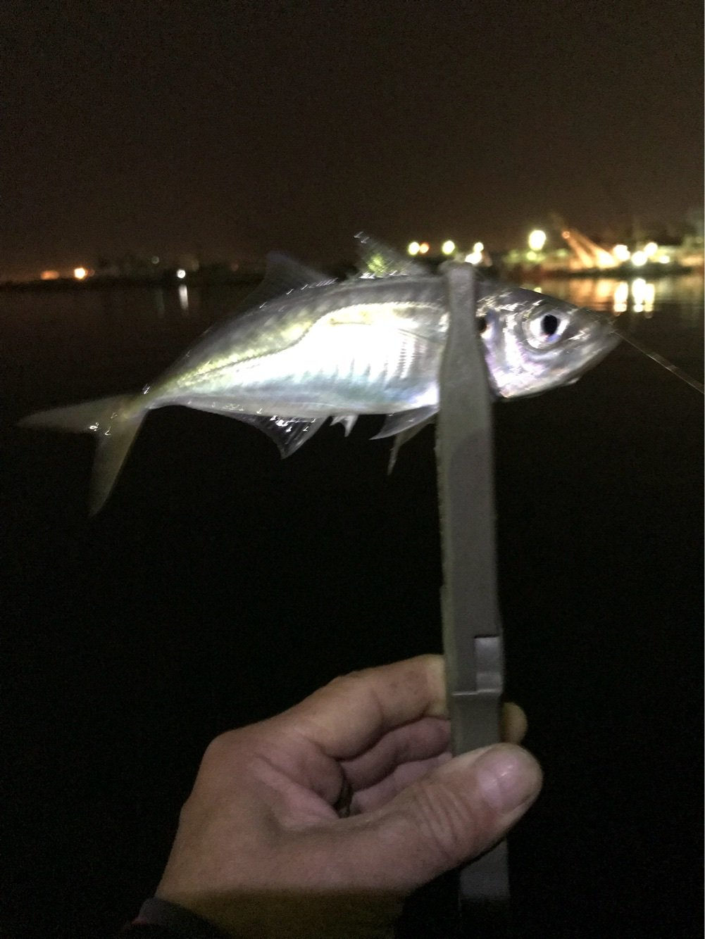 kappatoshiさんの投稿画像,写っている魚はアジ