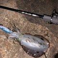 カズズさんの山形県米沢市での釣果写真