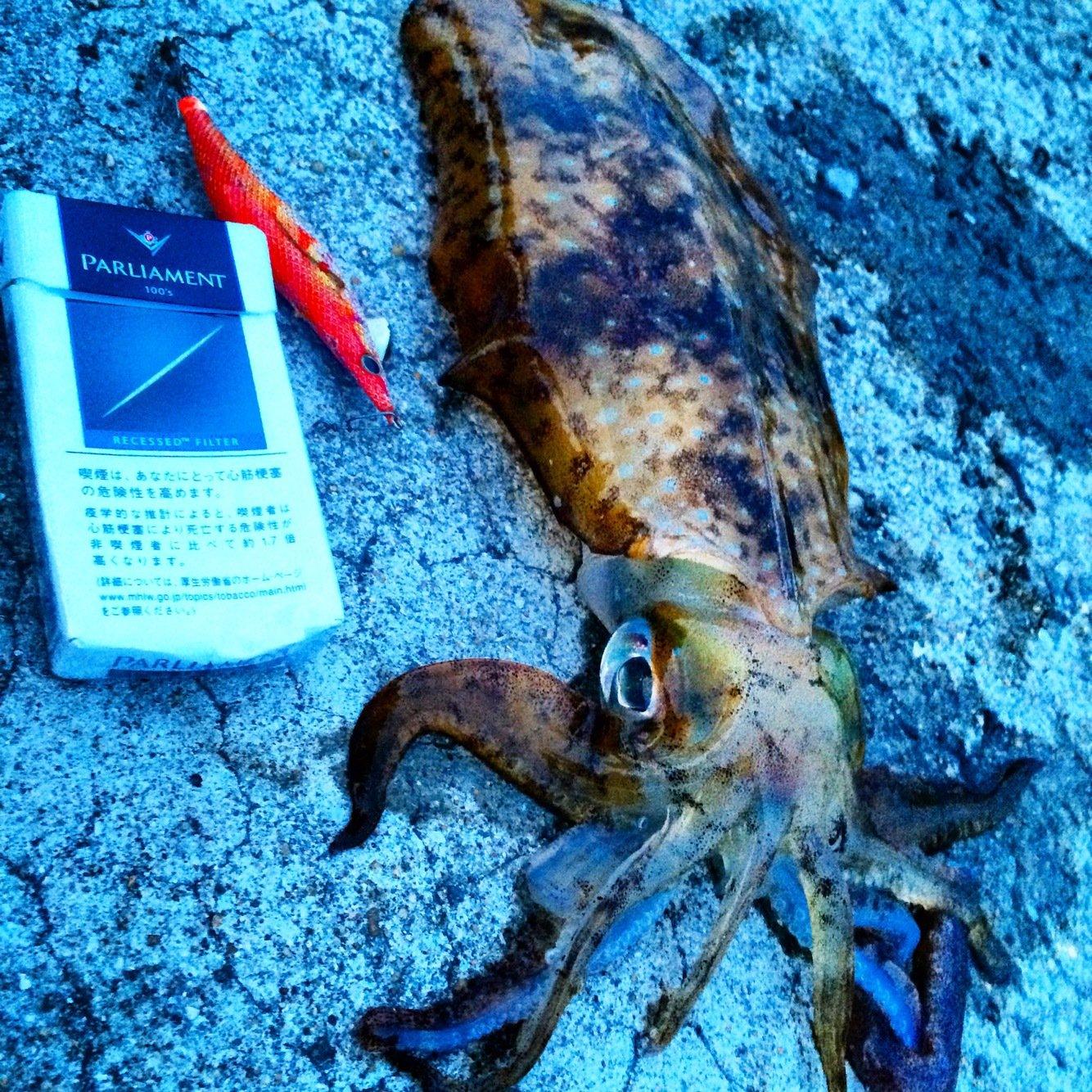 tho.incさんの投稿画像,写っている魚はアオリイカ
