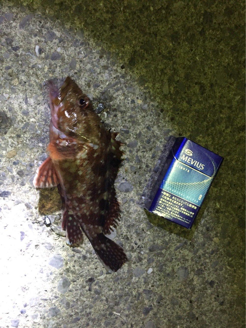 Quattroさんの投稿画像,写っている魚は