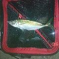 深田さんの茨城県那珂市での釣果写真