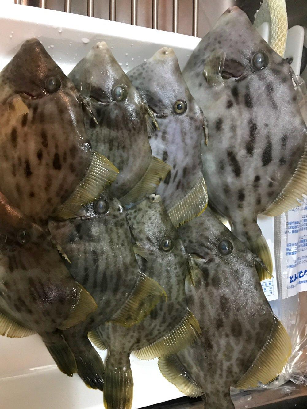 侑さんの投稿画像,写っている魚はカワハギ