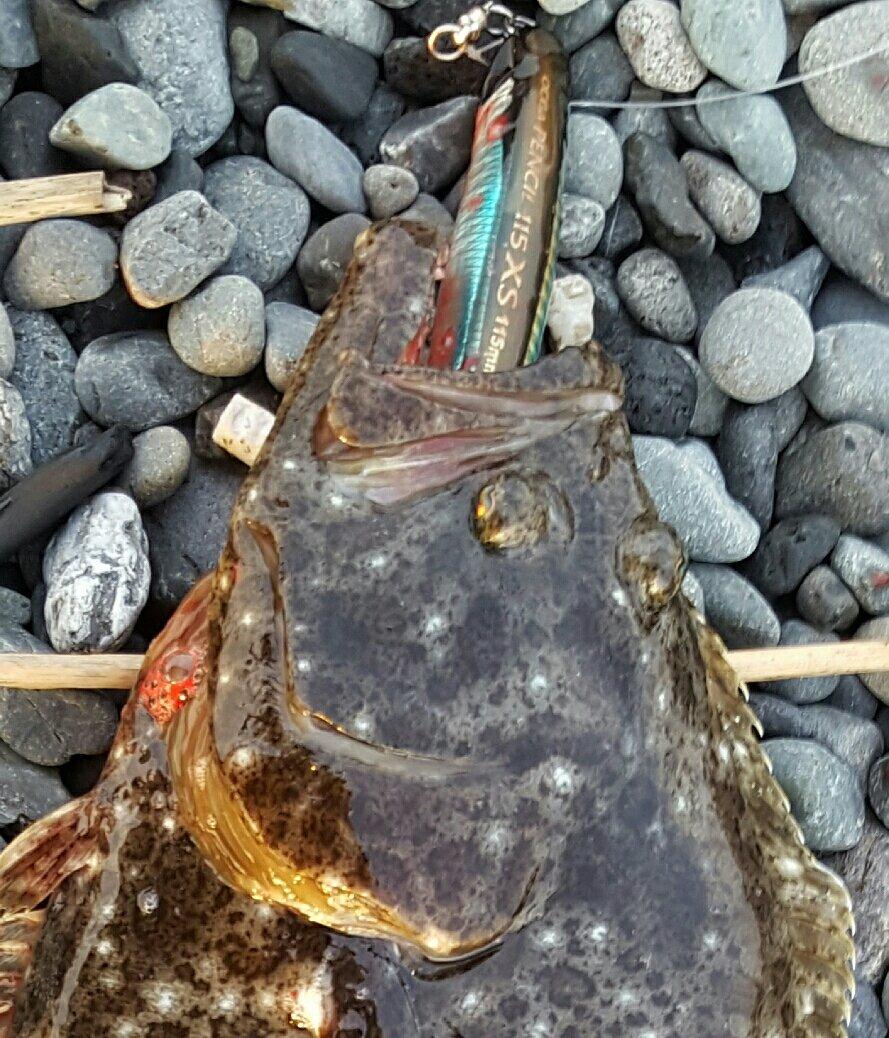 モブさんの投稿画像,写っている魚はヒラメ