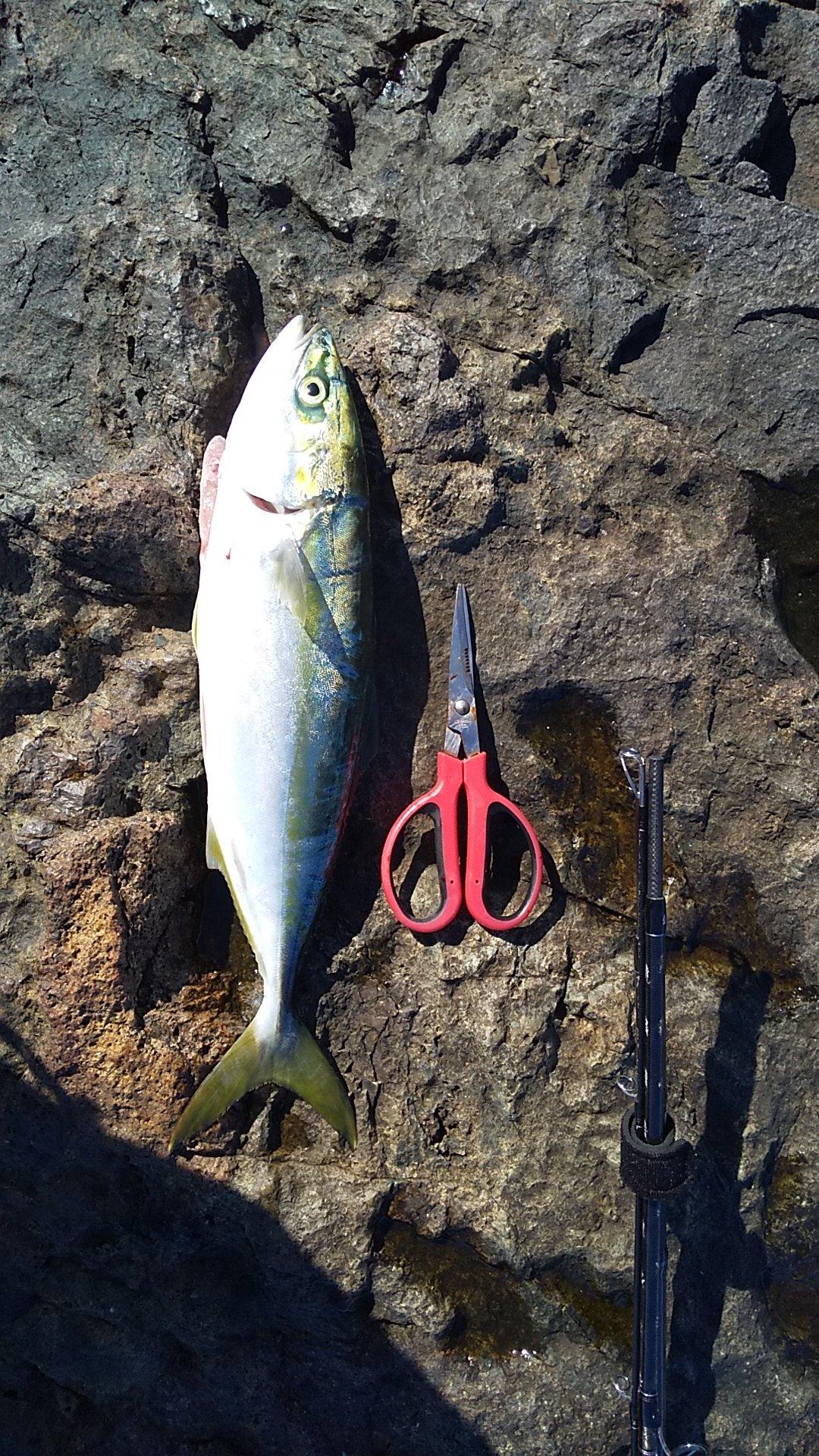 ㈱ⅢⅨ‐⑧さんの投稿画像,写っている魚はブリ