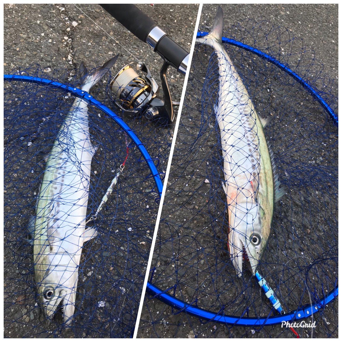 YUNTAさんの投稿画像,写っている魚はサワラ